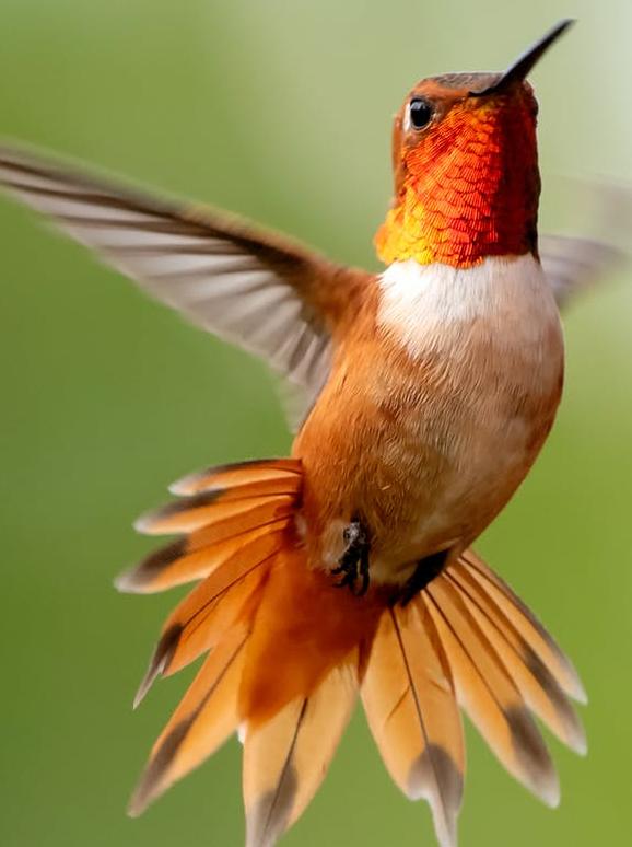 Un beau colibri